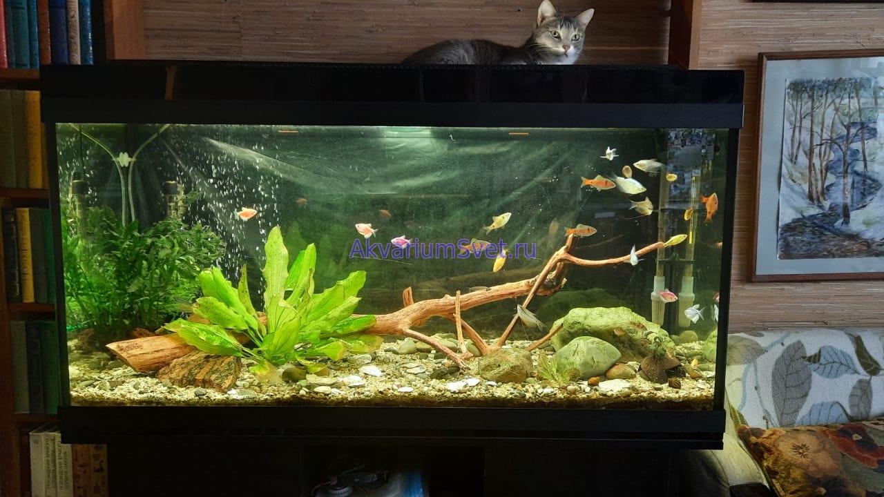 http://akvariumsvet.ru/Blog/modernizacija_ssb_akva_2x30w-15.jpg