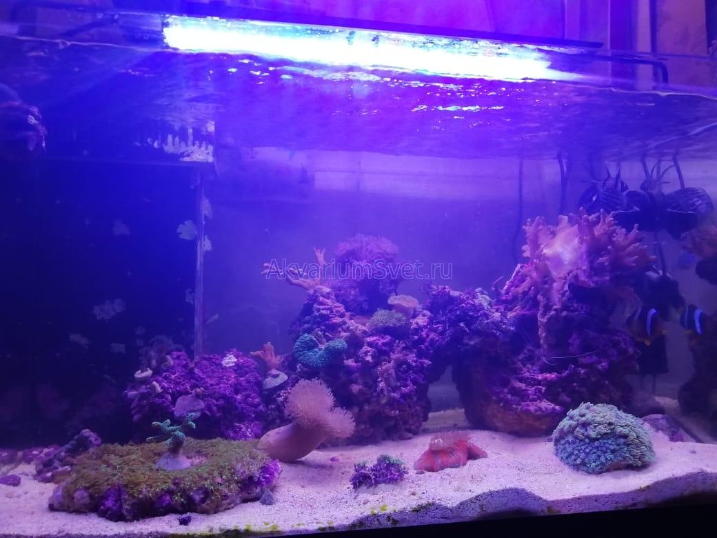 Следующие фото и видео прислал хозяин аквариума.